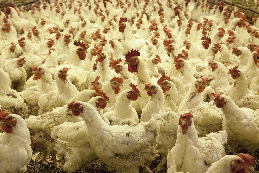 poultry-farm-min