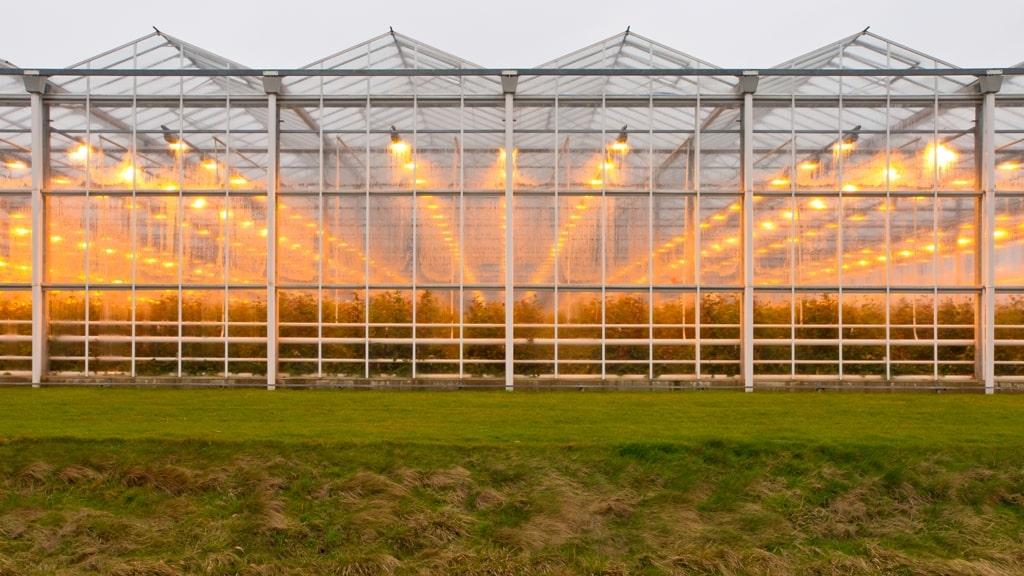 glastuinbouw LED verlichting
